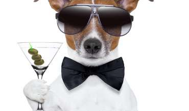 A dog (terrier) holds a martini (alcoholism) while wearing sunglasses and a black bow tie